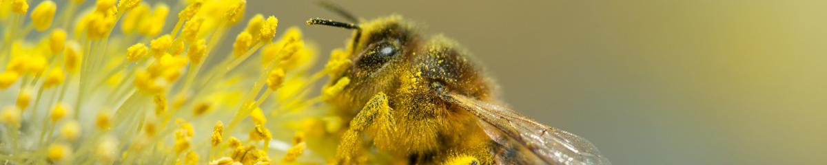 Neonicotinoids: Role of pesticides in bee decline